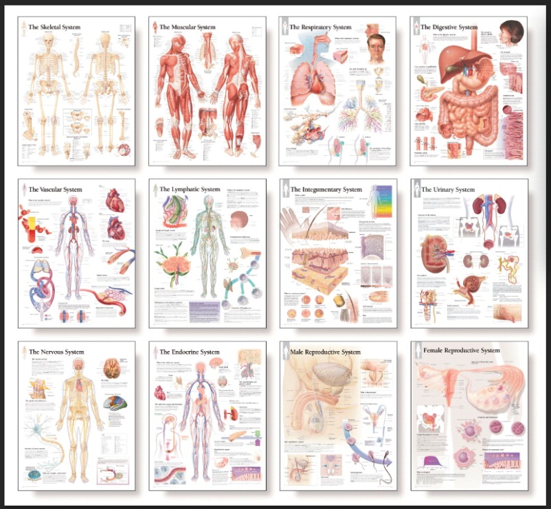 Scientific Publishing Ltd Complete Human Body Chart Series, Laminated, Set of 12