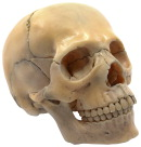 Lab and Anatomical Models, Item Number 2021786