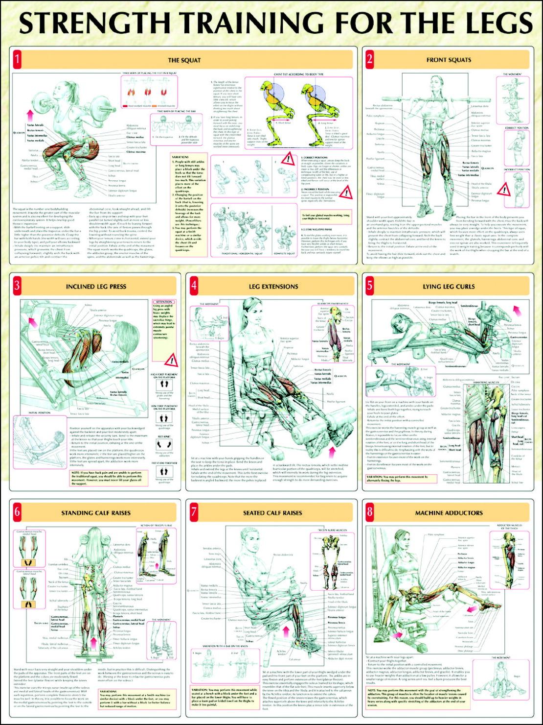 Download PDF Delaviers Womens Strength Training Anatomy 5706642 ...