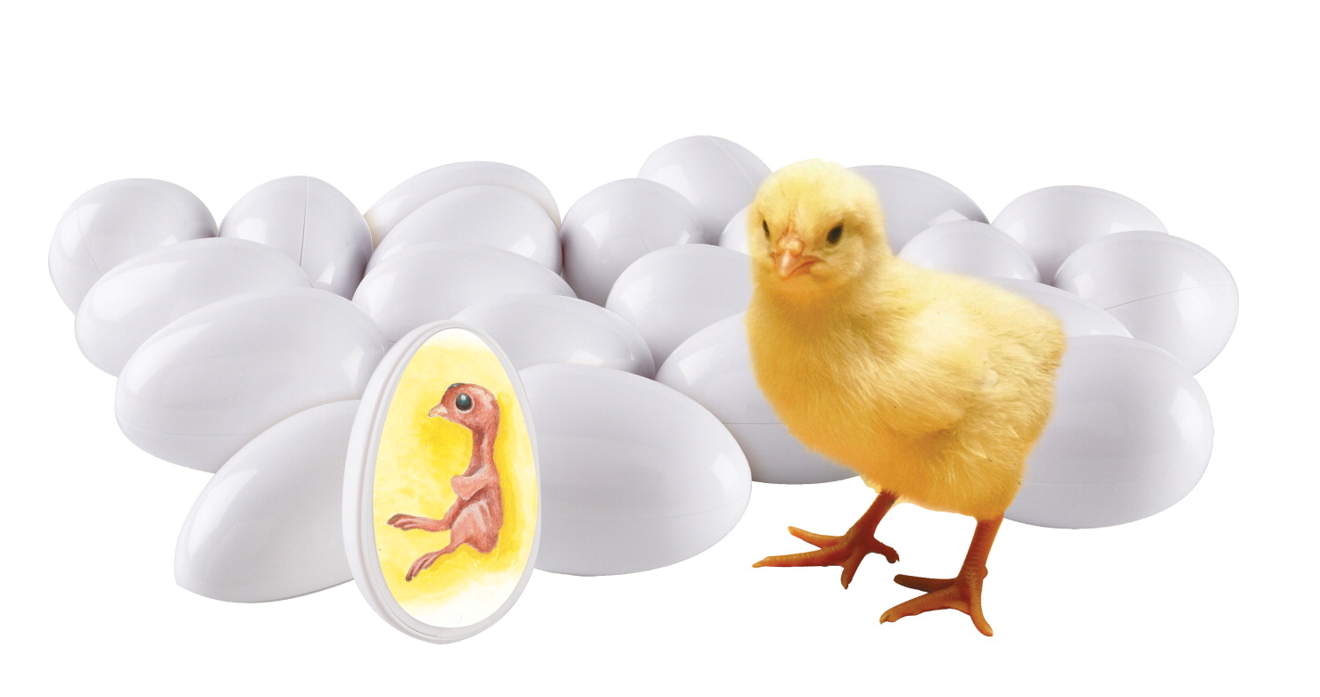 Learning Resources Chick Life Cycle Exploration Set