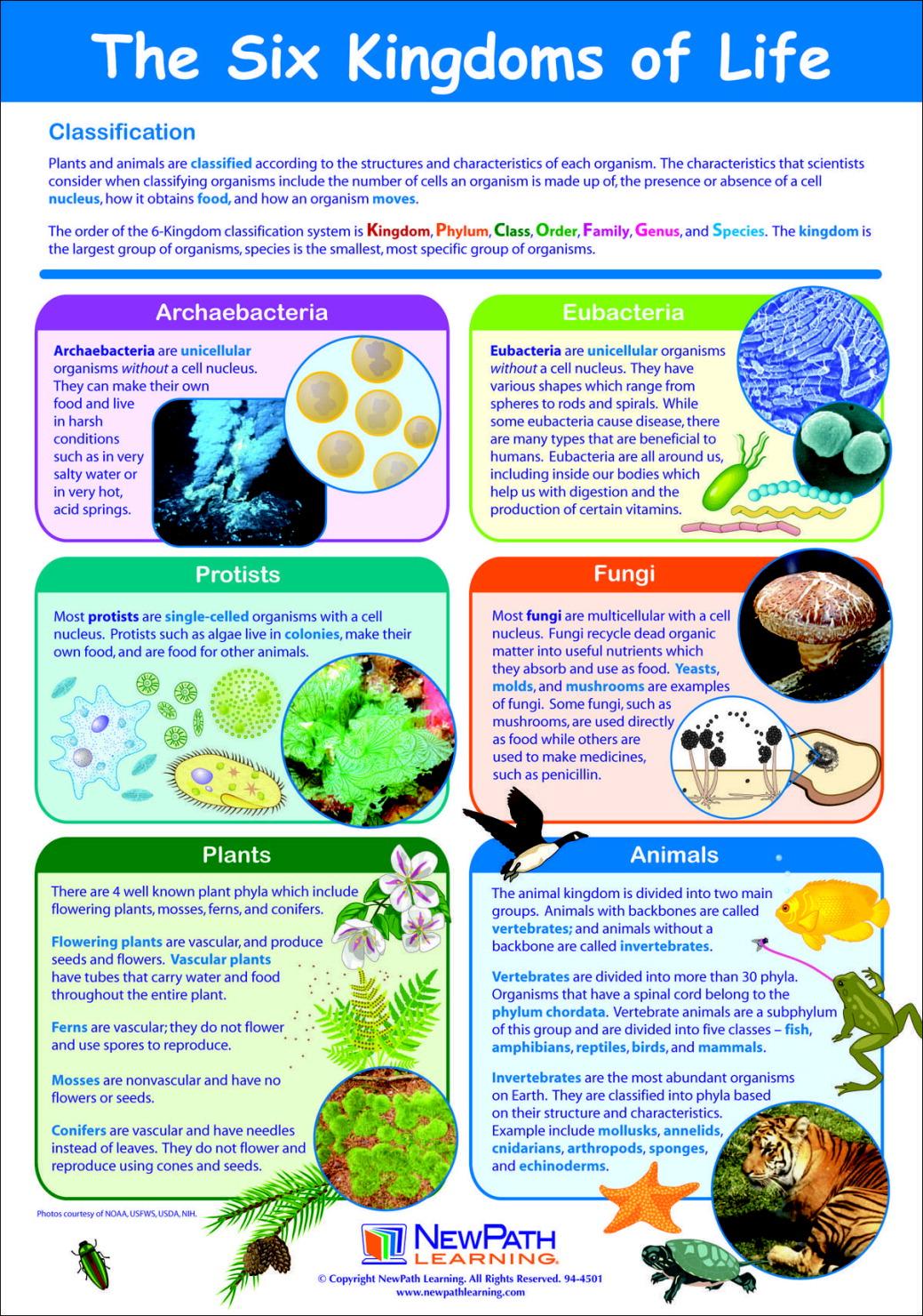 cpo life science book pdf