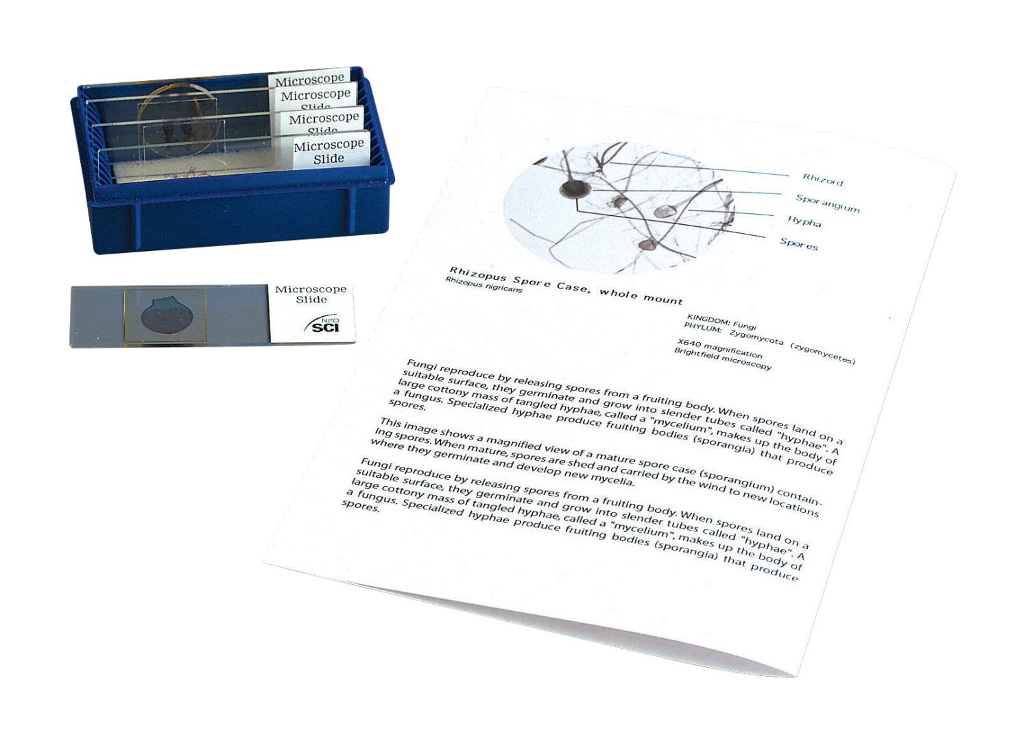 prepared microscope slide set frey scientific cpo science