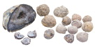 Delta Education DLX Classroom Geode Kit, Grade 5 - 6