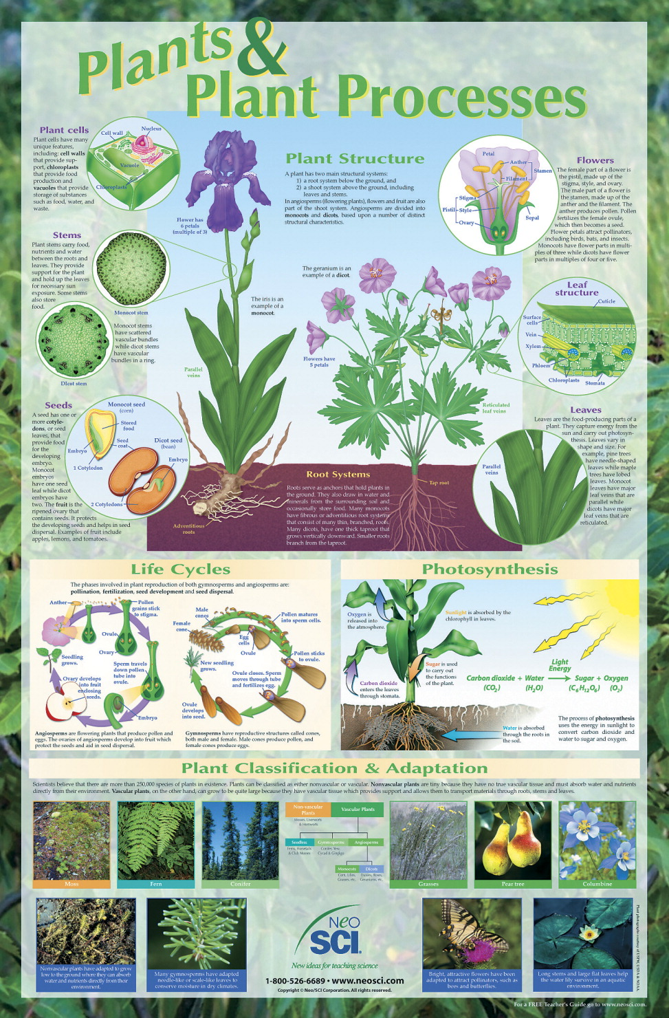 NeoSCI Plants and Plant Processes Laminated Poster, 23 in W X 35 in H, Grade 6 - 12